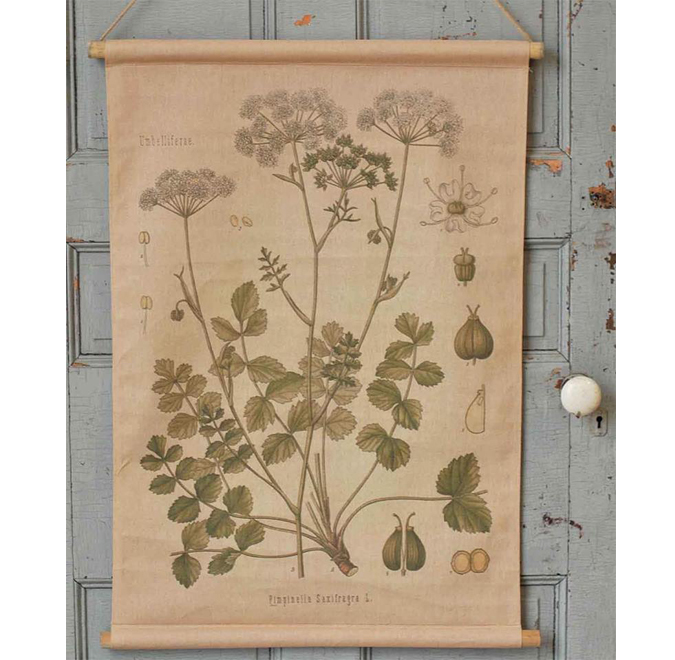 More cool botanical wall hangings IN THE SHOP!